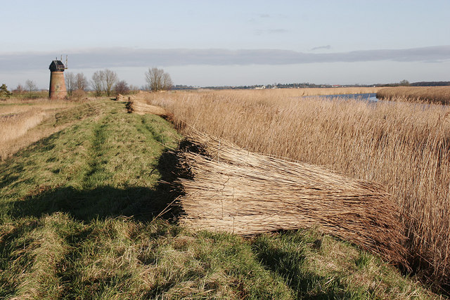 Reeds drying on footpath leading to Toft Monks Drainage Mill