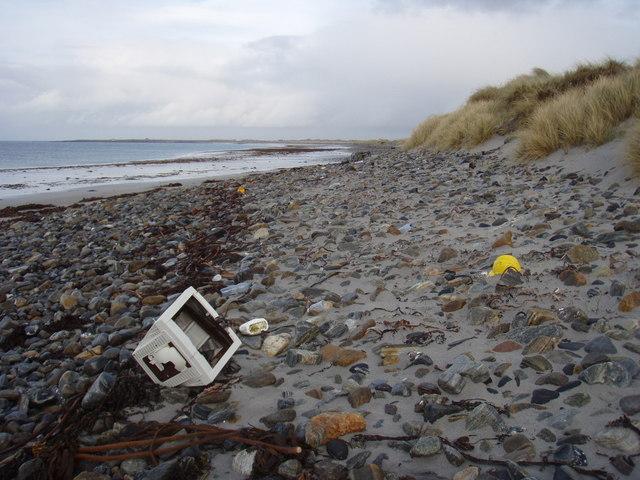 Dead monitor on Borgh beach