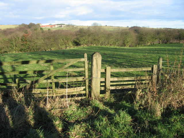 Towards White Hall Farm