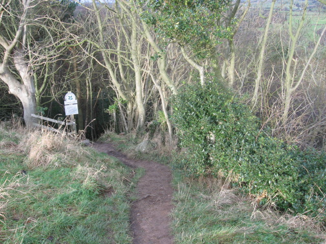 The Cleveland Way at Hayburn Wyke Nature Reserve
