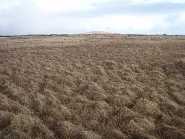 Moorland near Griminis
