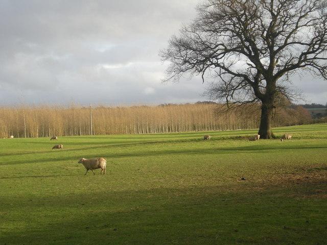 Farmland looking towards The Hayes