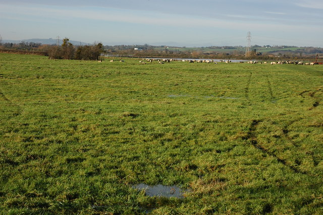 Sheep in a field at Twigworth