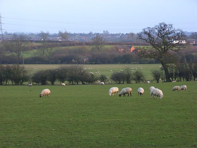Pastures, Hogshaw
