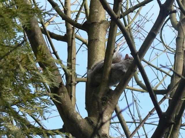 Bournemouth Gardens: camera-shy squirrel
