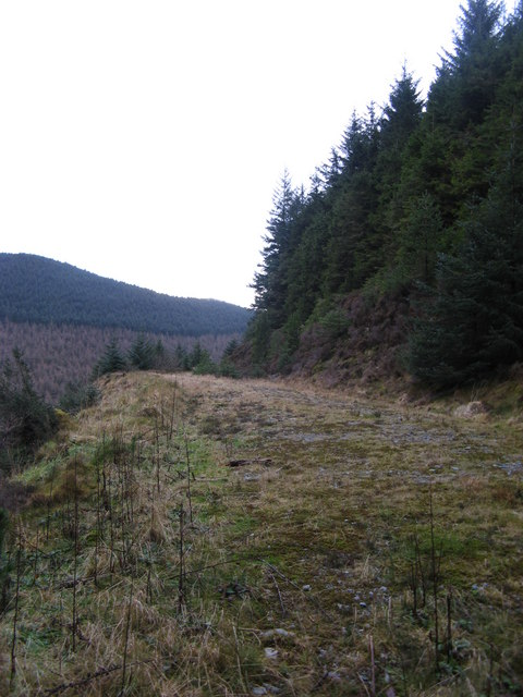 Forest Road on Banc Dolwen