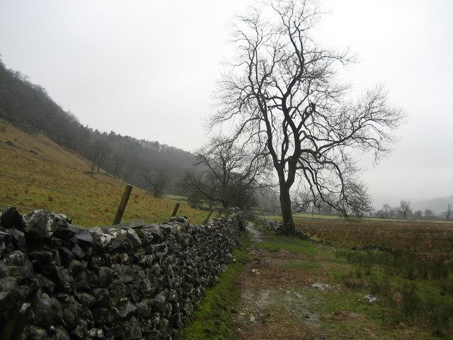 Dales Way below Firth Wood