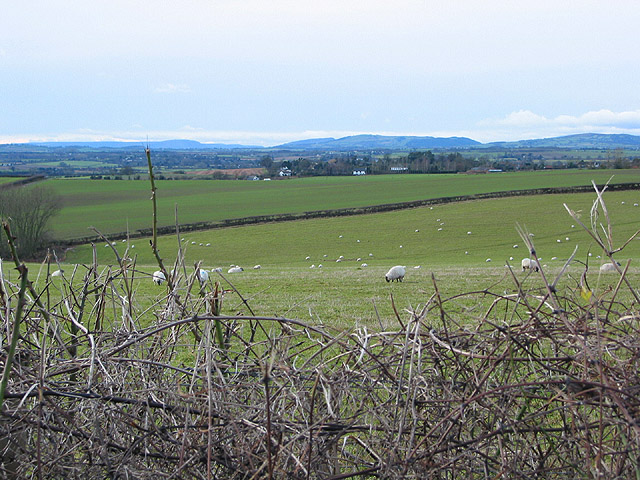 Sheep grazing near Park Farm