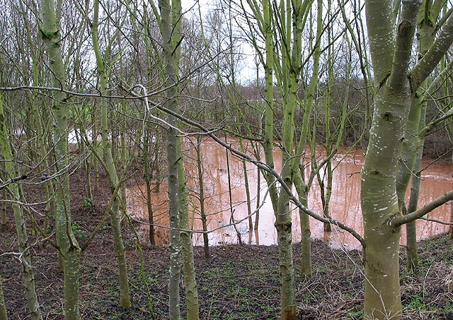 River Leadon spills over into small wooded area