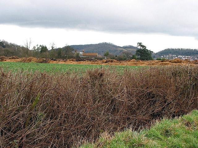 View Northeast across Flights Farm