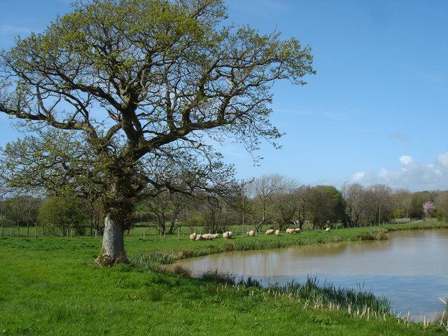 Lake at Langford Hele