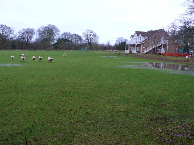 Sticky Wicket at North Perrott Cricket Club