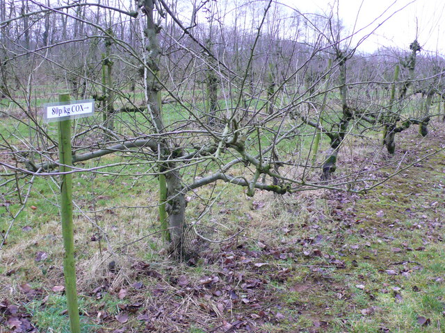 Cox's Apple Orchard at North Perrott