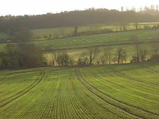 Farmland, Badby