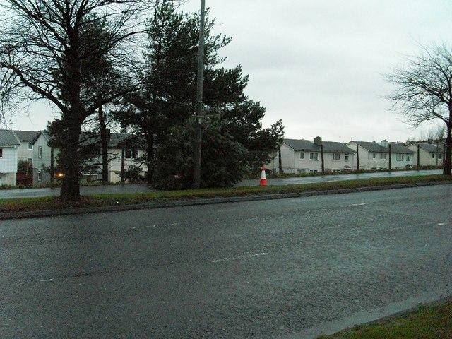 Felled tree by Great Western Road