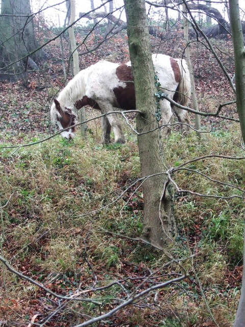 Pony in Lady Spencer's Wood