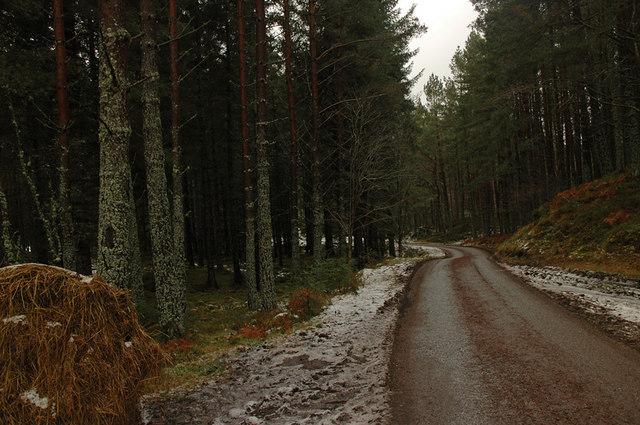 Forest near Rychraggan