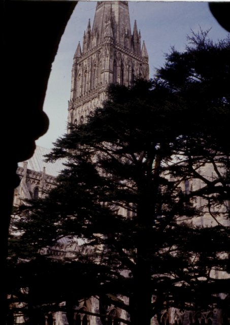 Tower and tree, Norwich Cathedral