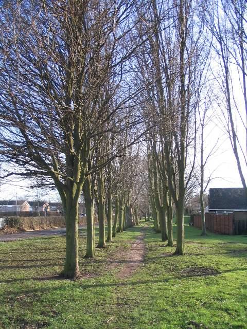 Trees alongside the A45