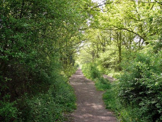 Bridleway, Frith Wood