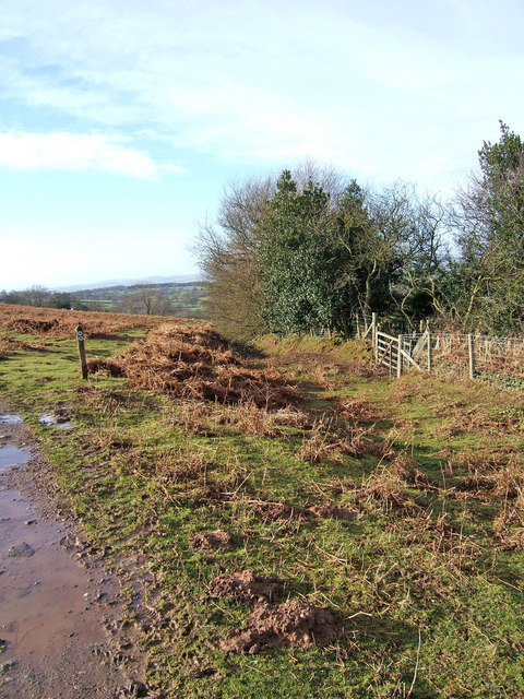 Meeting of bridleways on Clee Liberty Common