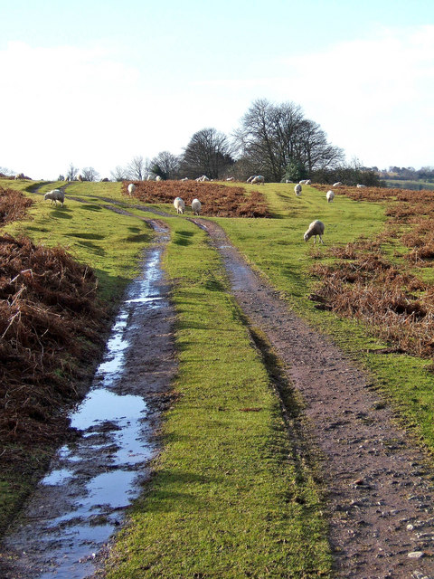 Track on Clee Liberty Common