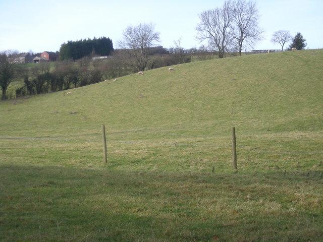 Grazing land at Rowley