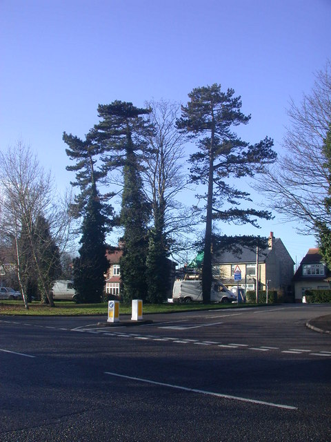 Tall trees by Cambridge Road