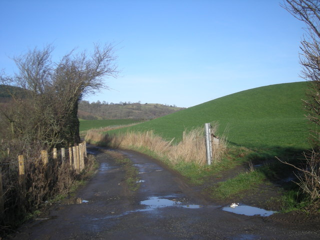 Track to 'The Cottage'