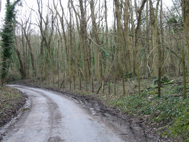 Road through Eastling Wood
