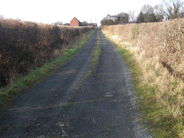 Driveway to Llwynyrhedydd