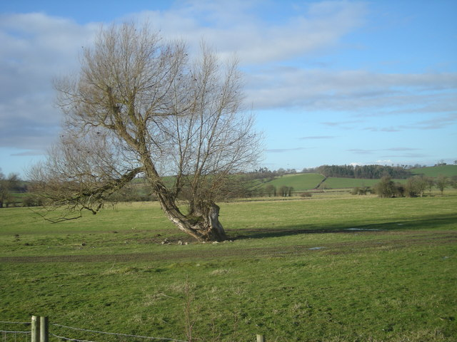 Old Tree on the English/Welsh border