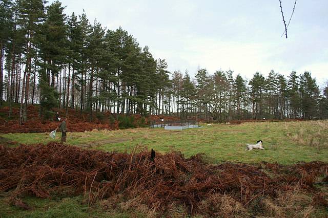 Pheasant pen to the west of the Altyre Burn