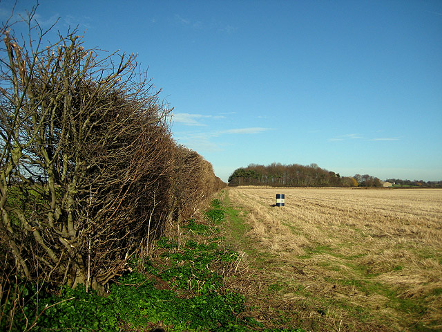 Hedgerow, wood and oil barrel