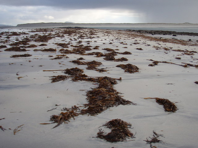 Seaweed on the beach near Sgeir a' Chotain