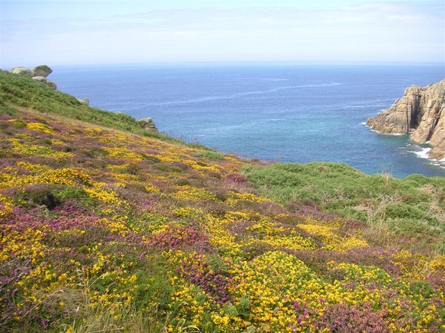 Heather, Carn Barra, West Penwith