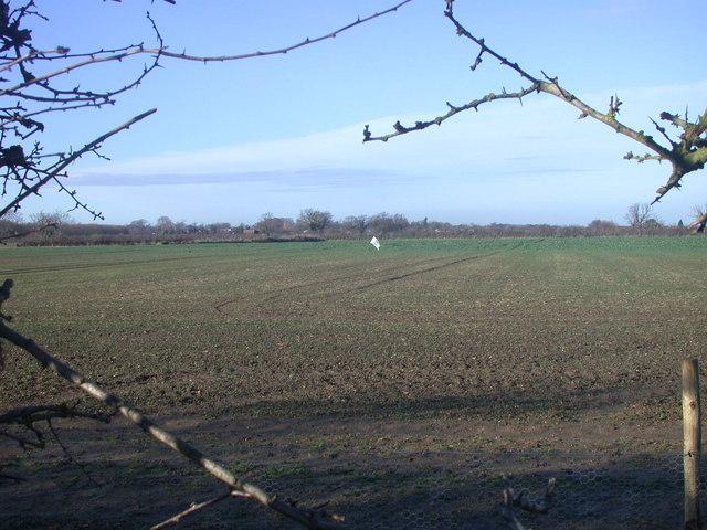 Field beside bridleway