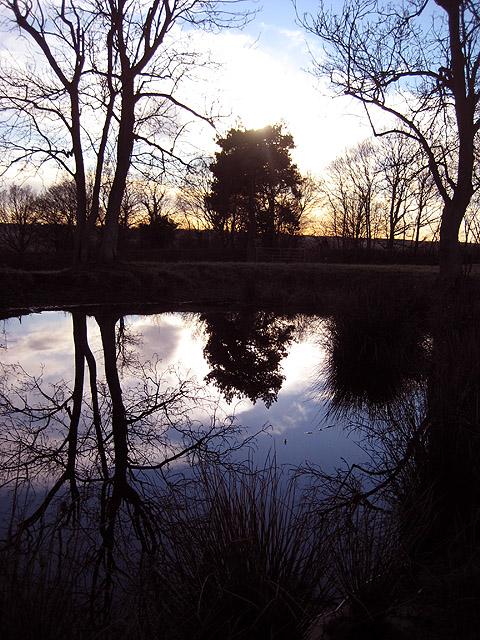 Mirror, mirror on the pond
