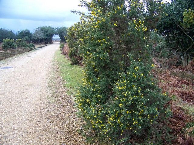 Track across Fritham Plain