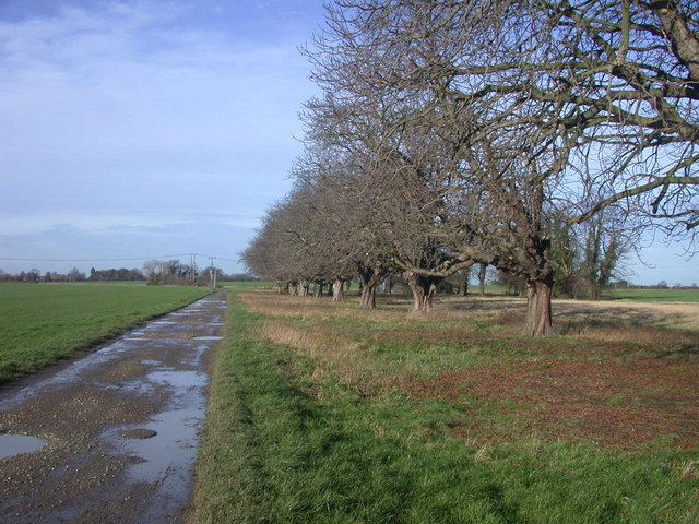 Trees by the track, Meadow Farm