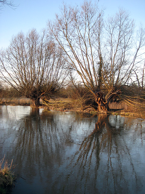 Full river, empty willows
