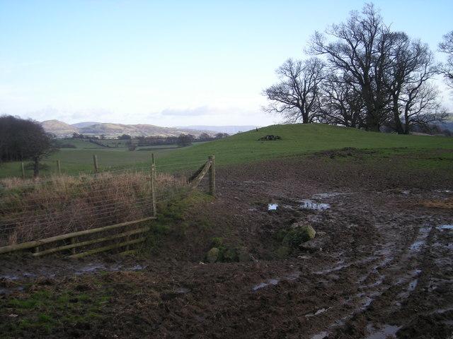 Grazing land opposite Llwynobin