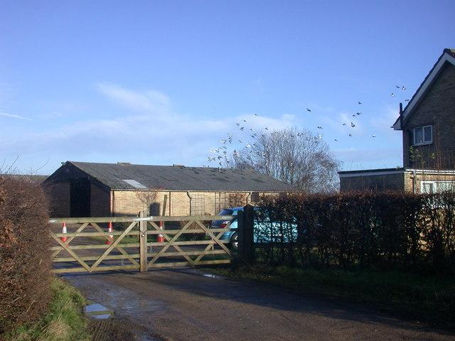 Pigeons landing on roof, Mansell Farm