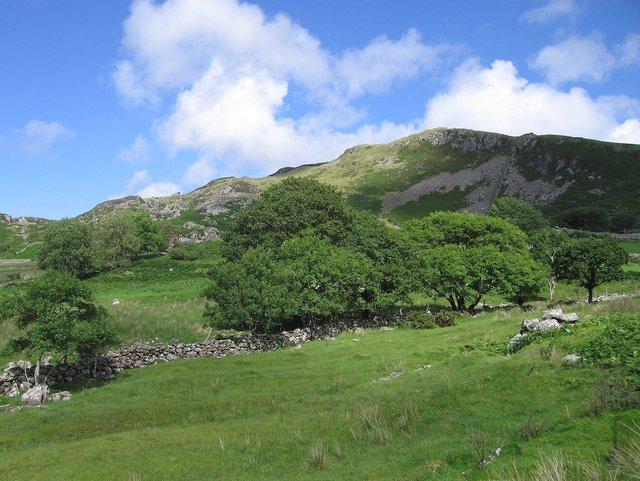 Upland pasture at Gefnir