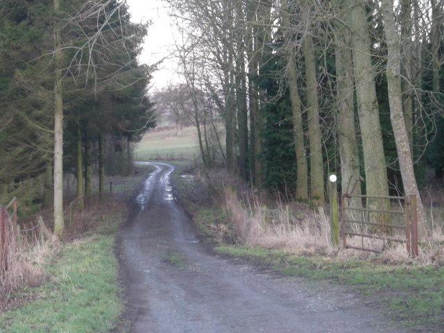 Track through woods