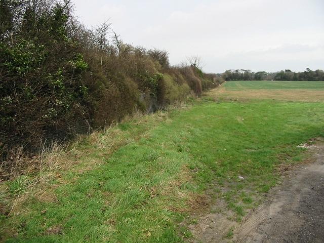 Hedgerow along railway cutting