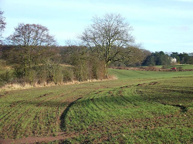 Crop Fields near Ashwood, Staffordshire