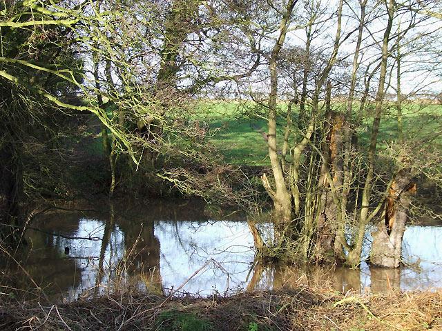 Wooded Pool near Ashwood, Staffordshire