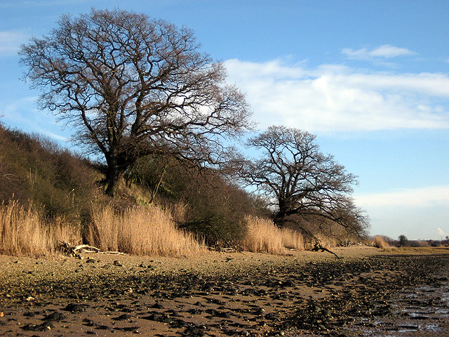 Twin oaks on Erwarton beach