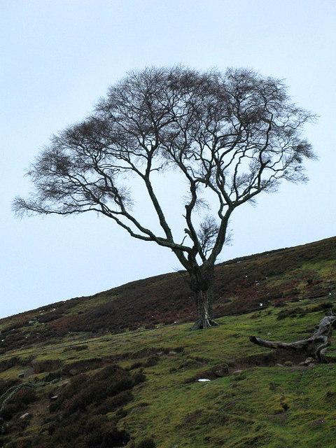 Lonely tree, Stony Side